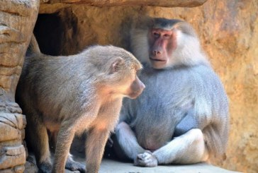 Animales del Zoológico recibieron millonario aporte y sus cuidados están garantizados temporalmente