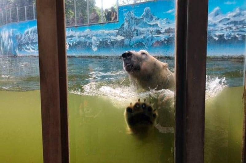 Un zoológico planea sacrificar animales para que otros subsistan — Coronavirus en Alemania