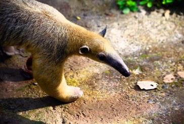 Aparecen animales en vía de extinción en Santander