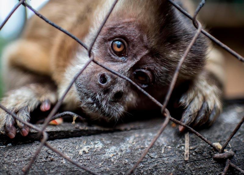 China comienza a dar subsidios para erradicar el tráfico de animales salvajes