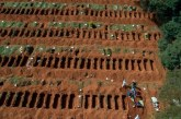 Brasil superó el medio millón de casos y roza los 30.000 muertos por COVID-19