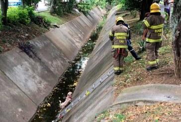 Cuerpo de Bomberos de Cali rescató dos perros que cayeron a canal de aguas lluvias