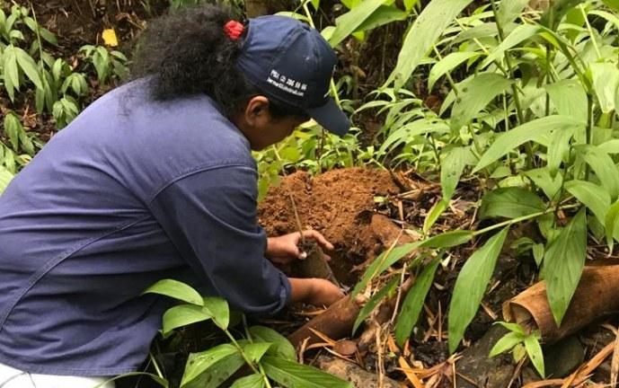 Ejército Nacional y CVC realizarán una 'Sembratón' de 13 mil árboles en Valle del Cauca