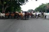 Con los caballos afuera, Pesebreras solicitan a la Alcaldía autorización para reactivar este sector