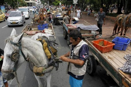 Alcaldía de Cali y carretilleros acordaron privilegiar el bienestar de los equinos
