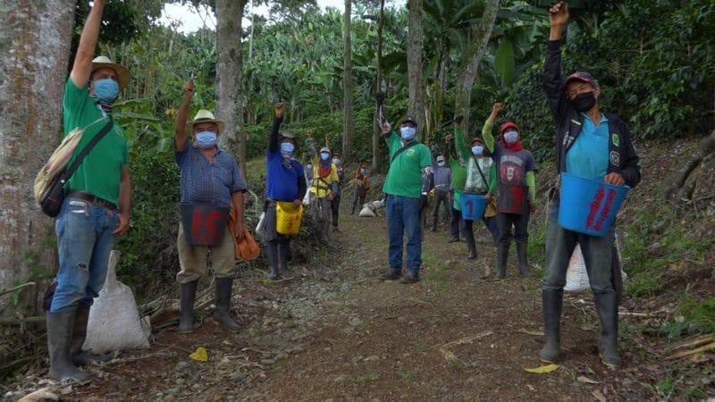 'Plan Cosecha' prevé recolección de más de 400 mil sacos de café que buscan aliviar economía en Valle