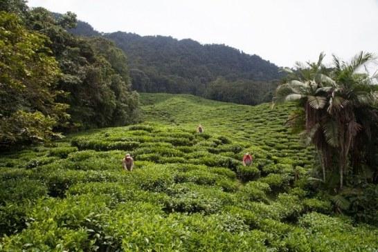 La Fundación Agrícola Himalaya fue galardonada en los premios Latinoamérica Verde