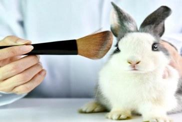Gobierno prohíbe la prueba de cosméticos en animales en Colombia