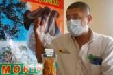 Un colombiano promueve el uso ancestral de la algarroba y las plantas medicinales