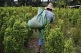 Proponen campaña para contrarrestar reclutamiento de menores para cultivos ilícitos en Valle