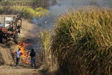 Desde este miércoles se prohíbe la quema de caña en zona rural de Cali