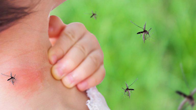 valle-ano-epidemia-dengue-20-mil-casos-18-09-2020