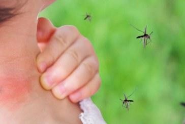 Valle cumple un año bajo epidemia de Dengue, con más de 20 mil casos