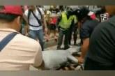 Yegua se desploma halando una carretilla en las calles de Cali