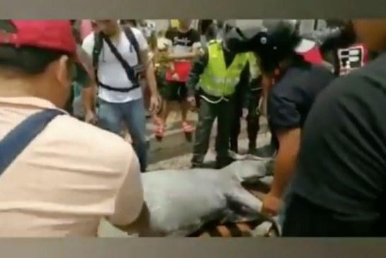 Hombre es judicializado por maltrato animal a una yegua