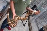 Tráfico de fauna silvestre: un mercado de maltrato y muerte
