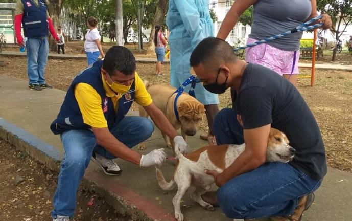 250 caninos y felinos fueron atendidos en la jornada de salud animal