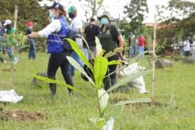 Inició jornada de restauración ecológica y siembra de más de 400 árboles en Pance