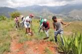 Jóvenes participan en jornada de siembra de árboles en Cristo Rey