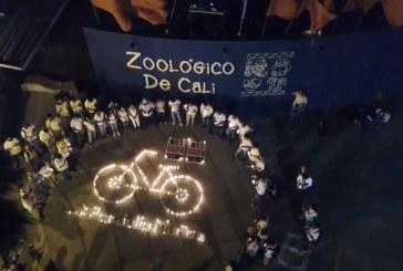 Velatón por jardinero del 'Zoo' de Cali que murió al ser arrollado por conductor ebrio