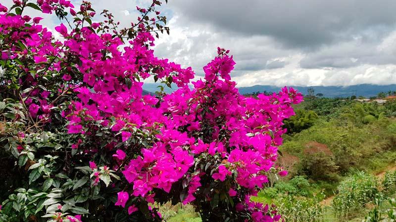 Llega a Telepacífico 'Viajáte El Valle', apuesta que recorrerá los mejores destinos turísticos