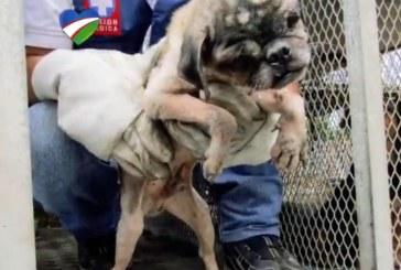 Rescataron a 69 perros que utilizaban para reproducción y compra de mascotas