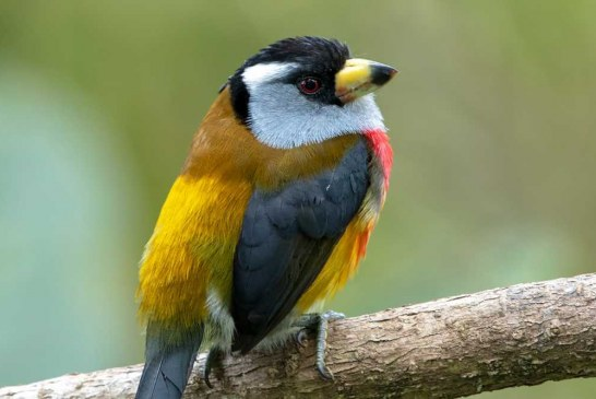 Conozca la programación virtual de Colombia BirdFair para amantes de la avícola colombiana