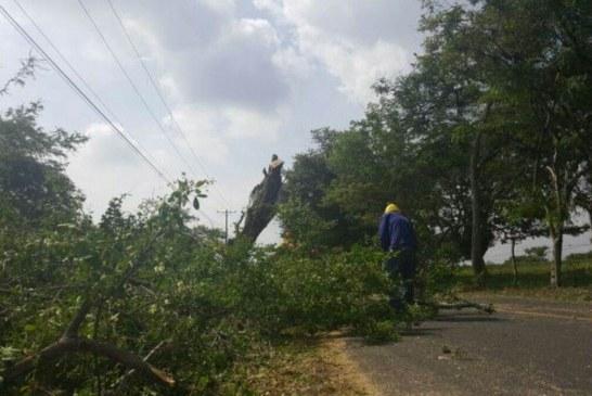 Denuncian tala indiscriminada de árboles en el norte de Cali