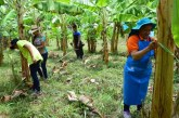 El MinTIC selecciona al Valle, para desarrollar herramientas tecnológicas en agricultura