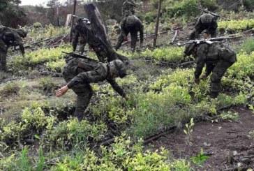 Ministro de defensa presentó plan de erradicación de cultivos ilícitos