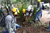 Reserva forestal ocupada ilegalmente fue recuperada por la Alcaldía