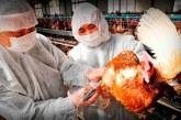 Nuevo brote de gripe aviar se detecta en una granja de Japón