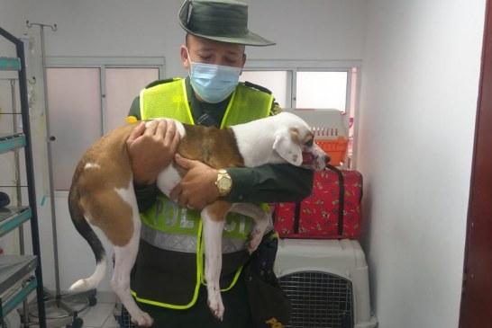 Indignación en Tuluá por hombre que agredió con machete a un perro cuando le ladró