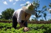 Gobernación del Valle lanzó programa para beneficiar a 1.200 productores