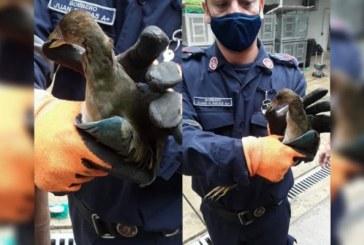 Bomberos rescataron ave en peligro de extinción al oeste de Cali