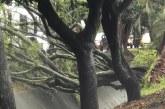 La fuerte tormenta que desveló a Cali dejó graves afectaciones