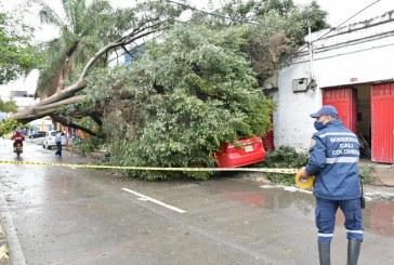 Más de 30 árboles caídos y estructuras colapsadas, luego vendaval en Cali