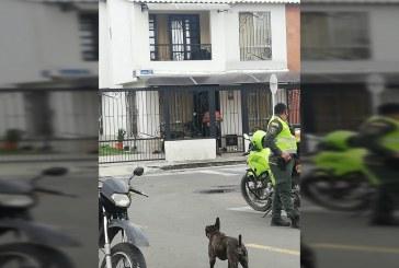 Abren investigación contra el presunto asesino del perro 'Pilín', en Palmira