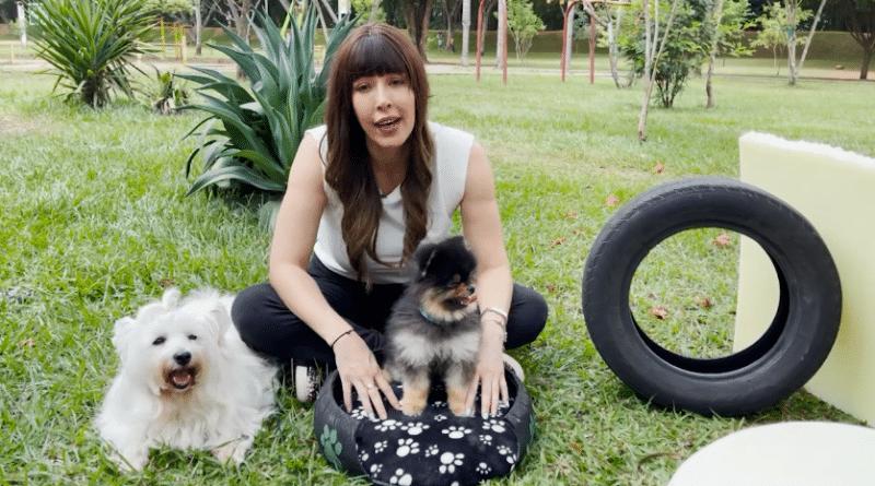 Inició campaña para realizar camas para perros con materiales reciclados