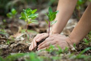 Presidente Duque expone nueva técnica para siembra masiva de árboles