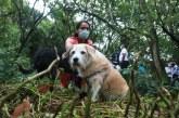Centro de Bienestar Animal atenderá animales víctimas de maltrato