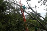Dagma recibe 200 solicitudes mensuales exigiendo tala de árboles