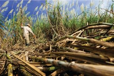 Ingenios azucareros gravemente afectados por el paro nacional