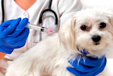 La vacunación de mascotas contra el covid-19 arrancó en Rusia