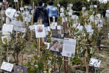 Las cenizas de víctimas de covid, fuente de vida de un páramo en Colombia