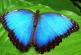 Colombia, el país con más especies de mariposas en el mundo