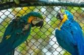 Cuatro guacamayas fueron reubicadas en un mejor espacio por el Dagma