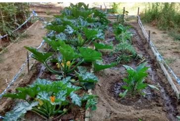 Reactivación económica del agro en el Valle, mediante cooperación nacional e internacional