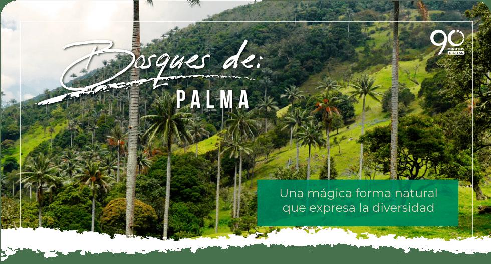 ¿Bosques de Palma de Cera en el Valle del Cauca? sí, descúbrelo y ve a disfrutarlo