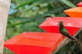 Bosque nublado en el Kilómetro 18 espera cautivar el turismo de avistamiento de aves